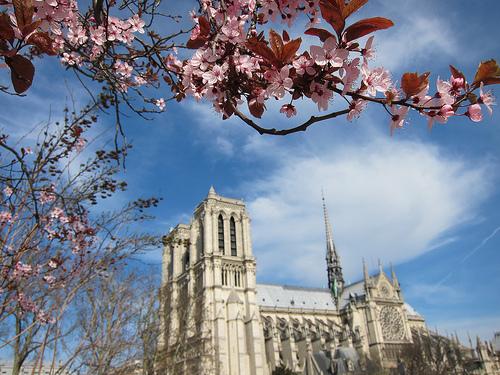 Notre-Dame-Paris-Spring-Blossoms1