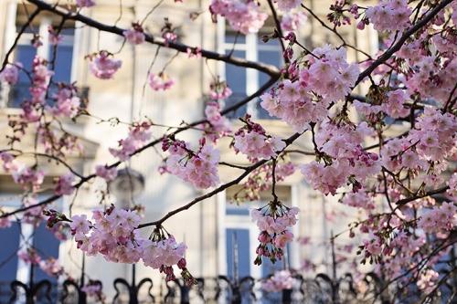 Spring-in-Paris-HiP-Paris-Blog-Photo-by-Rebecca-Plotnick-1